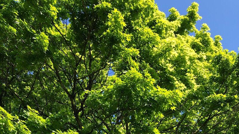 芥川龍之介も訪れた北大植物園の新緑